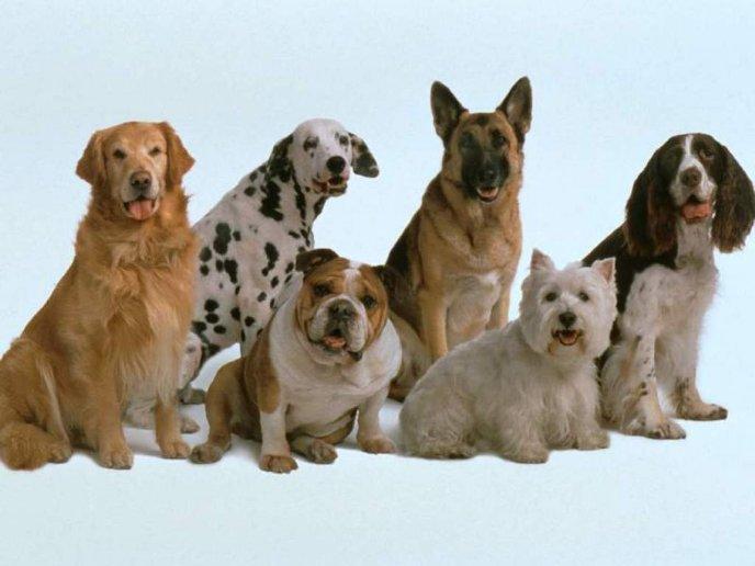 Ухоженная собака приносит пользу своему хозяину