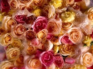 Фестиваль розы